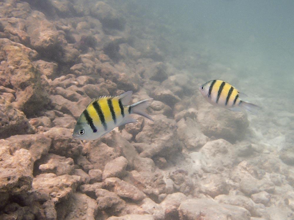 snorkeling bandos maldives-16