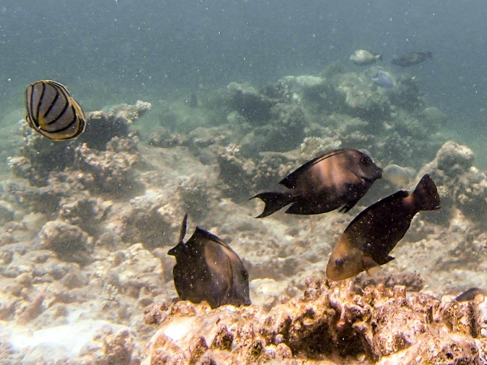 snorkeling bandos maldives-18