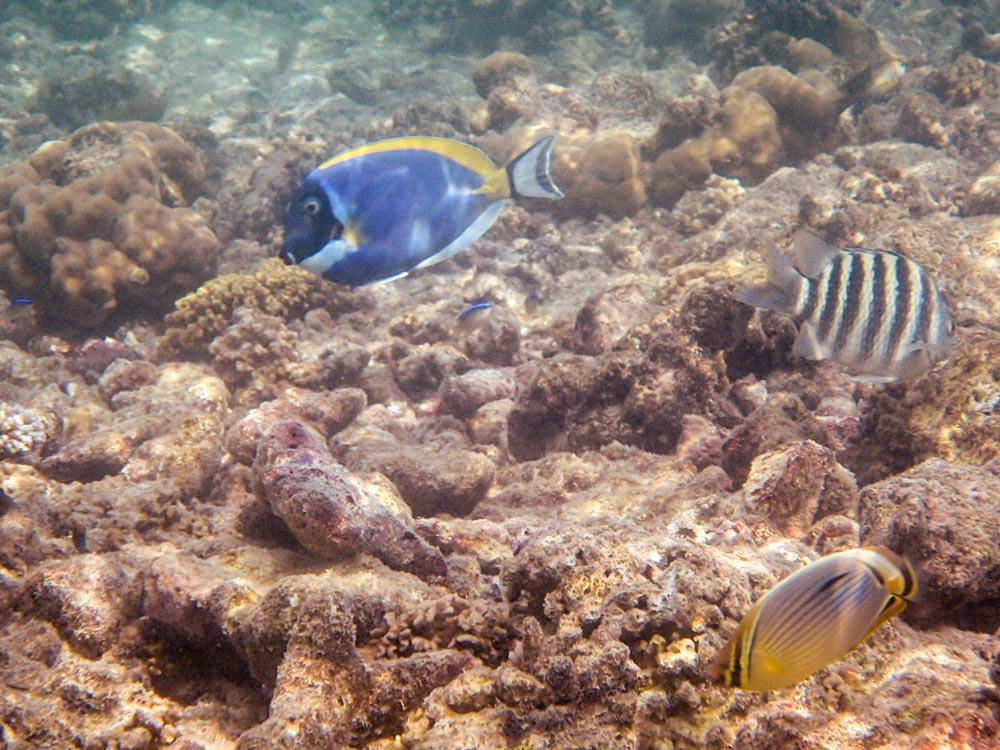 snorkeling bandos maldives-2