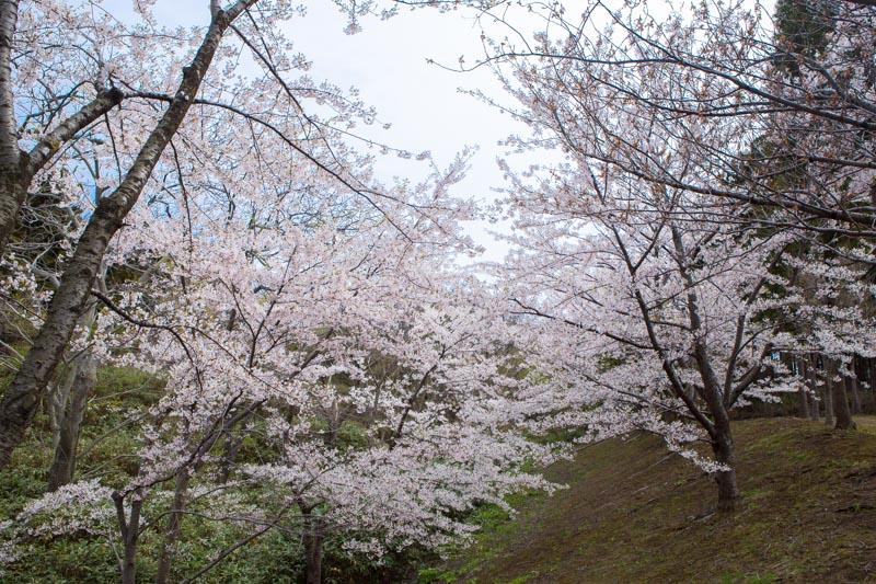 松前公園-函館旅行記-3