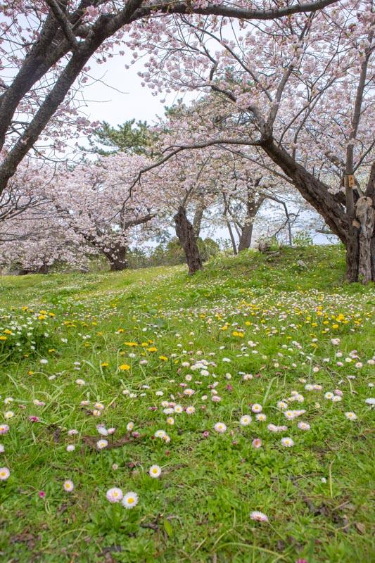 松前公園-函館旅行記-7