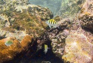 プランテーションベイ ビーチ魚2
