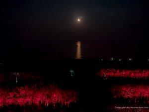 月の道 宮崎シーガイア