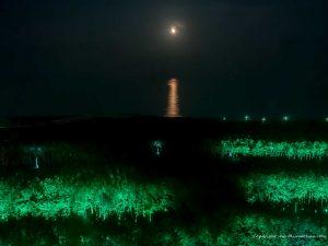 moon avenue seagaia miyazaki-3