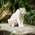 1歳児と3歳児を連れてシンガポール動物園とナイトサファリに行ってきました おすすめのショーは?