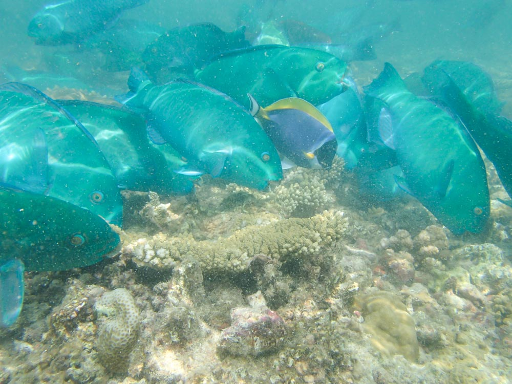 snorkeling bandos maldives-10