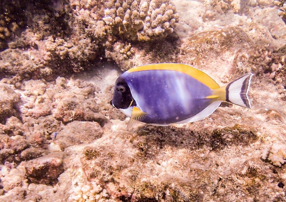 snorkeling bandos maldives-19