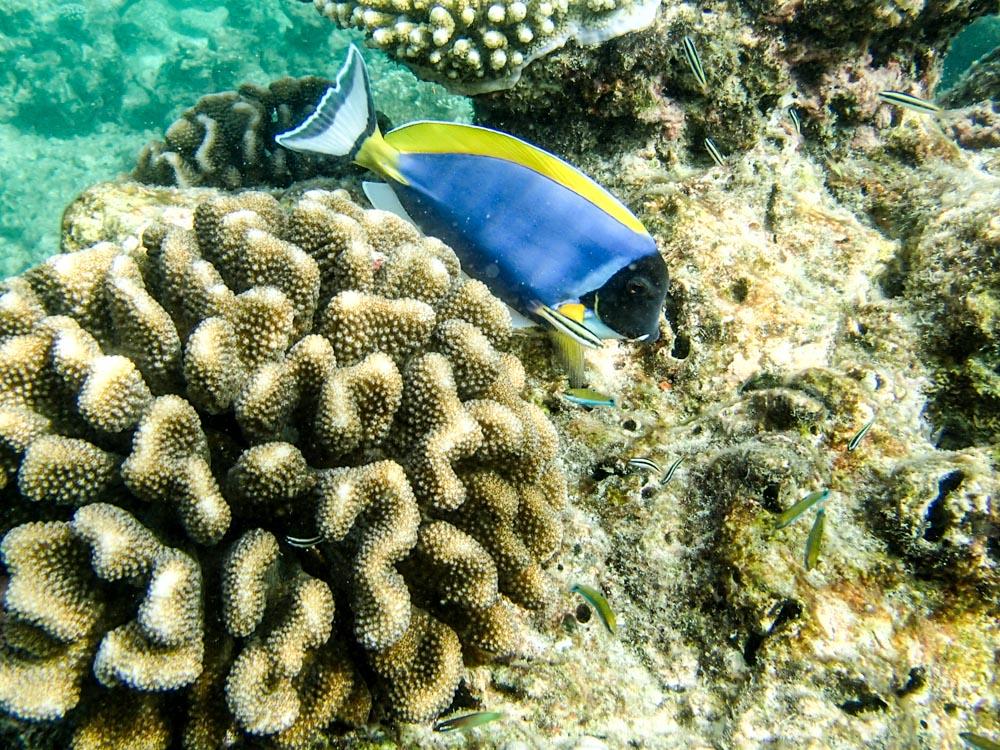 snorkeling bandos maldives-5