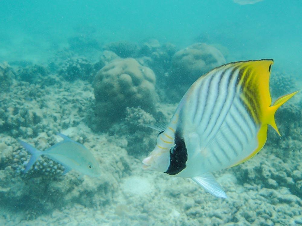 snorkeling bandos maldives-6