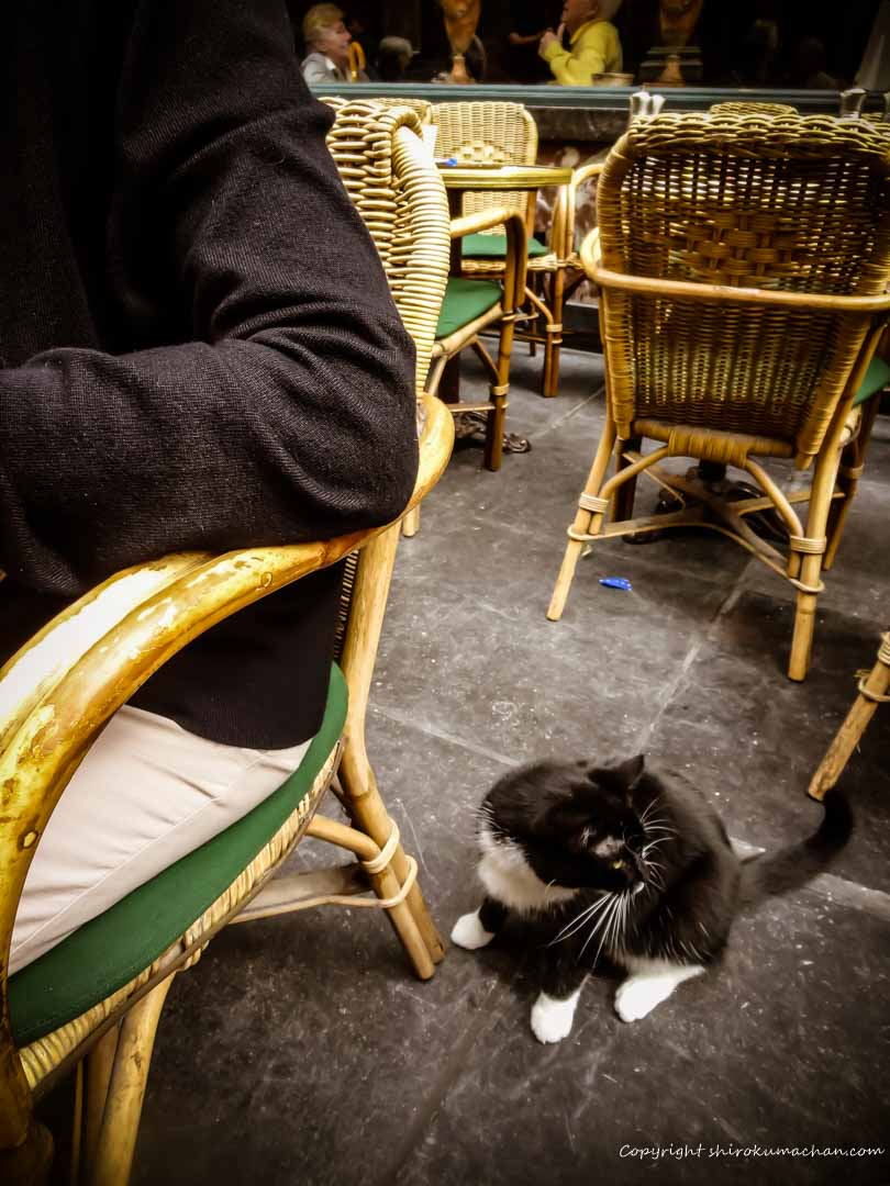 A cat in Galeries St. Hubert