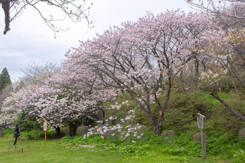 松前公園-函館旅行記-6