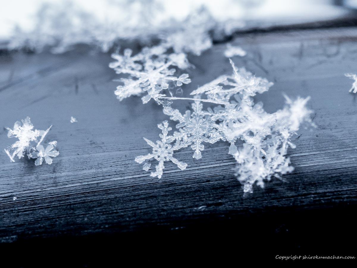 雪の結晶の写真の撮り方
