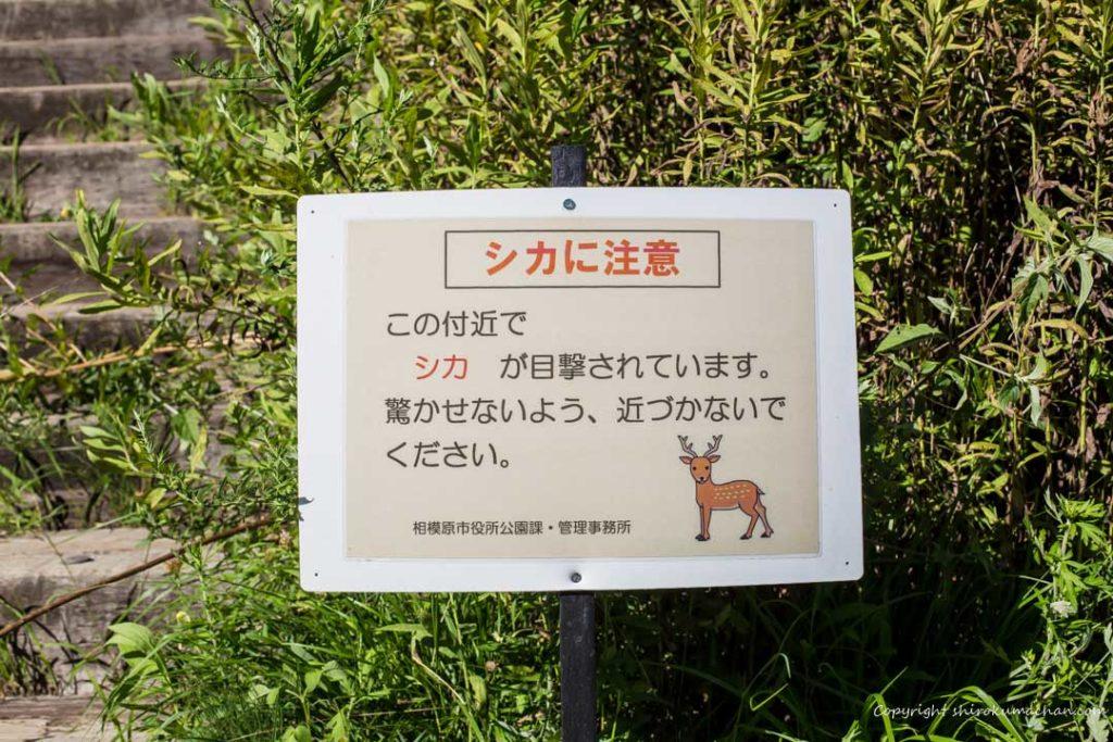 上大島キャンプ場-鹿が出るらしい