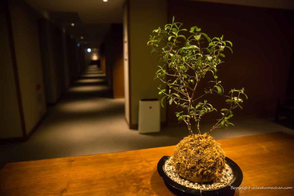 日本平ホテル客室盆栽