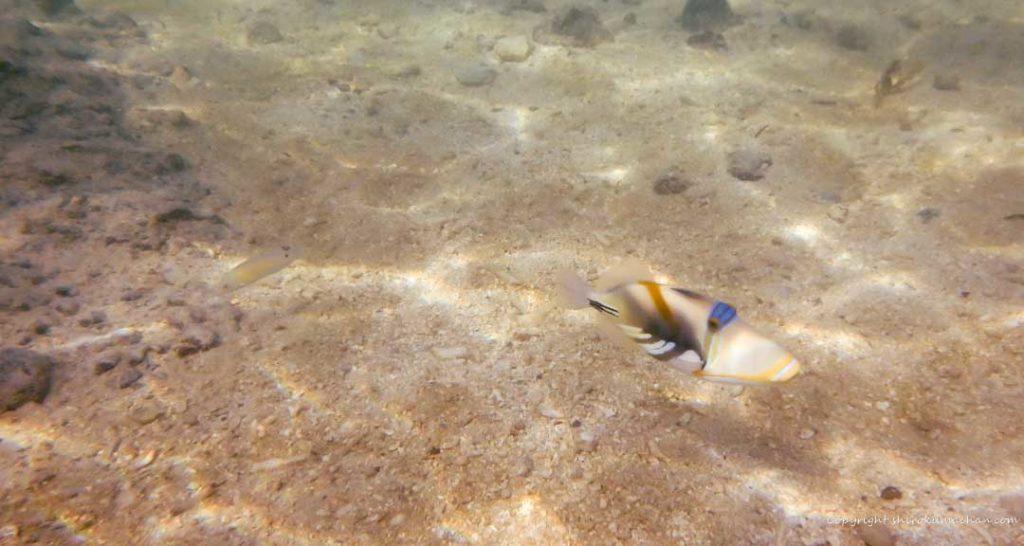 Club Med Ishigaki Beach Fish