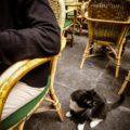 【子連れベルギー旅行記】ギャルリー・サン・チュベールとベルギーの老舗カフェ モカフェ